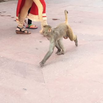 Seeing monkeys randomly walking around. Forget the zoo, this was so much better in person. Although, I could say I was a little bit nervous as their actions were a bit unpredictable