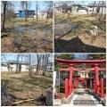 水芭蕉を見学(2021/04/07)@原別稲荷神社