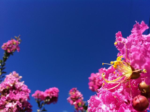 7月の花(7月に咲く花の画像や花言葉) | 花言葉-由来