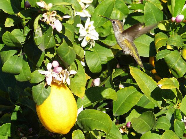 怖い レモン 意味 米津玄師「Lemon」のPVの意味は?MVが逆再生の理由も考察してみた!