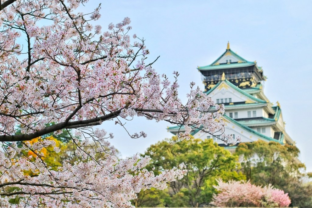 (Osaka Castle ) Close up Photography of Cherry Blossom Tree By Bagus Pangestu (Canva)