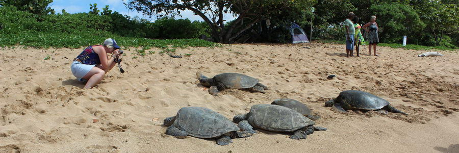 turtle-beach-grouping