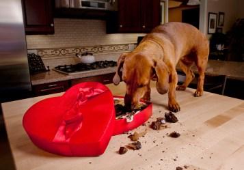 Dog-Gone-Good