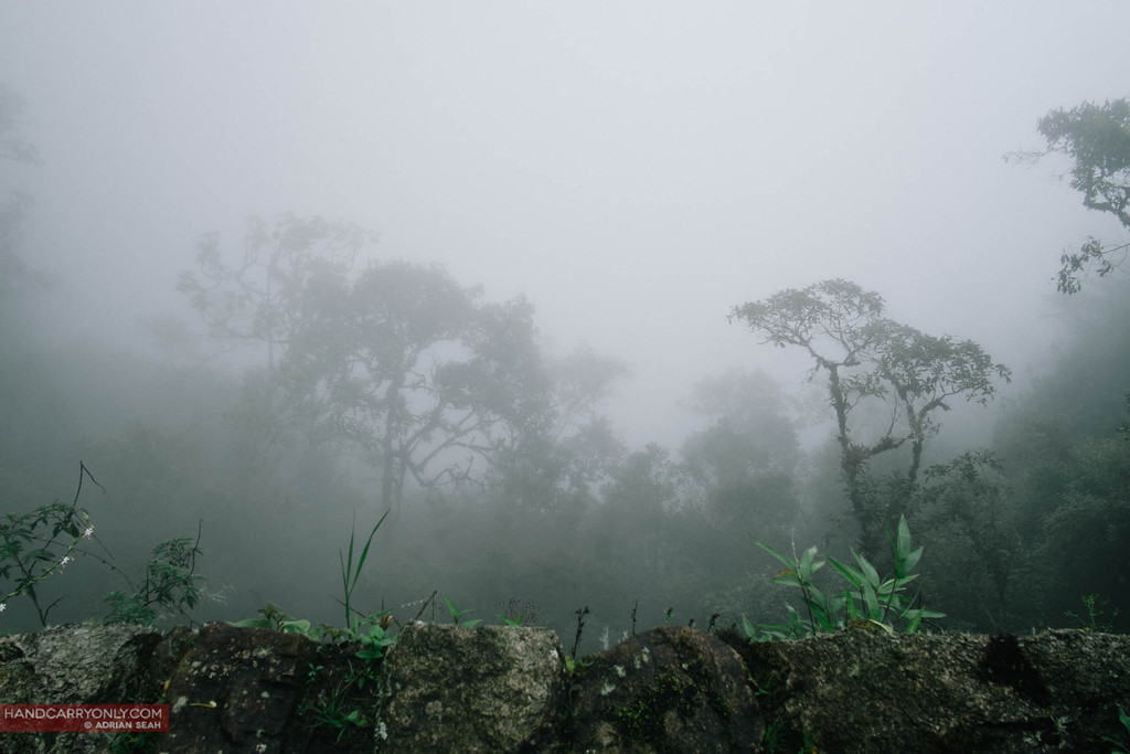 misty cloud forest macchu picchu peru