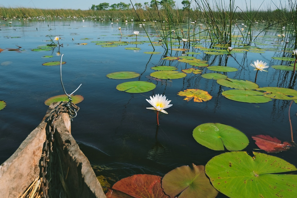 makoro on the okavango delta, botswana, africa