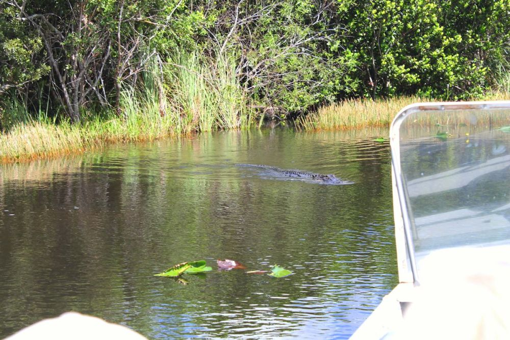 Things to do in Florida: Visiting The Everglades on Hand Luggage Only Blog (3)