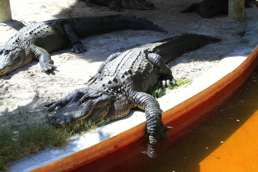 Things to do in Florida: Visiting The Everglades on Hand Luggage Only Blog (8)