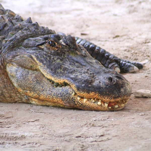 Things to do in Florida: Visiting The Everglades on Hand Luggage Only Blog (7)