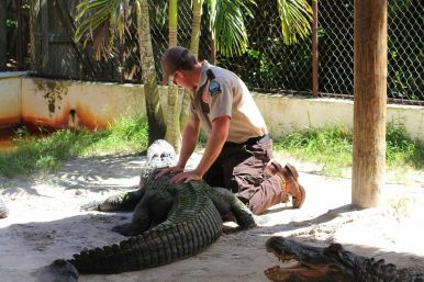 Things to do in Florida: Visiting The Everglades on Hand Luggage Only Blog (13)