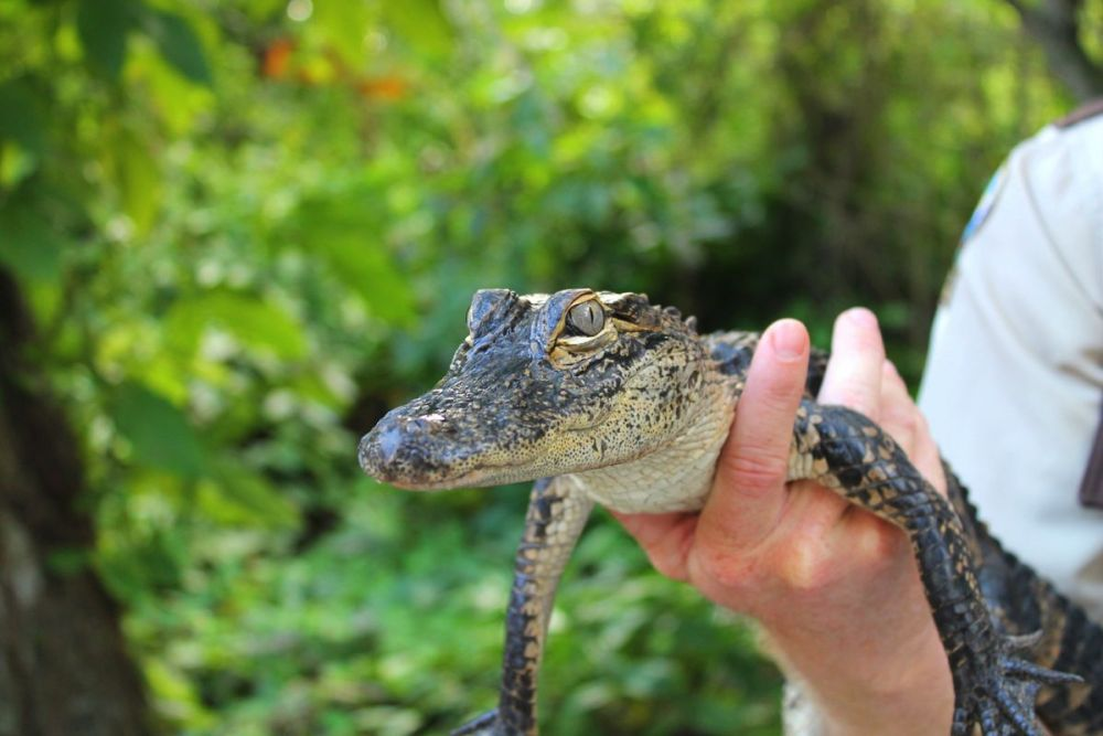 Things to do in Florida: Visiting The Everglades on Hand Luggage Only Blog (15)