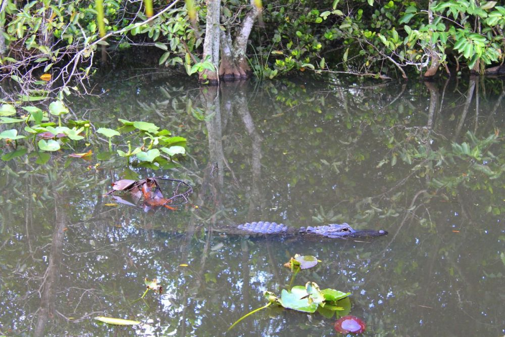 Things to do in Florida: Visiting The Everglades on Hand Luggage Only Blog (19)