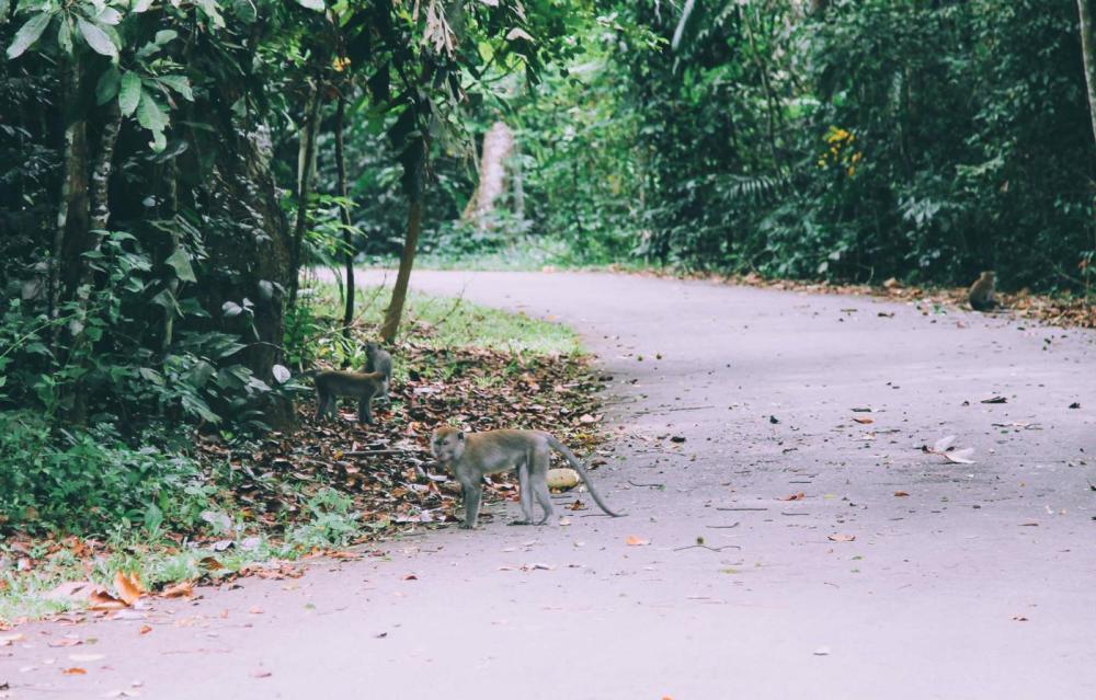 Going Off The Beaten Track in Singapore: Exploring Ubin Island... (14)