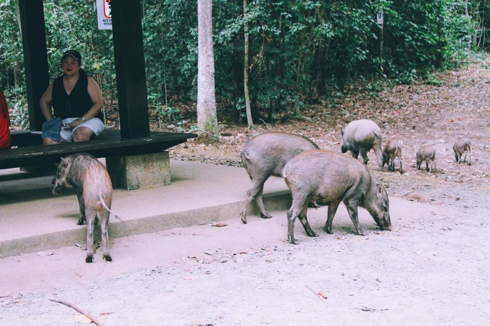 Going Off The Beaten Track in Singapore: Exploring Ubin Island... (4)