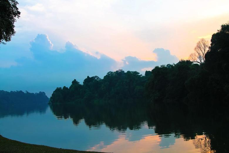 MacRitchie Nature Trail, Singapore Travel (4)