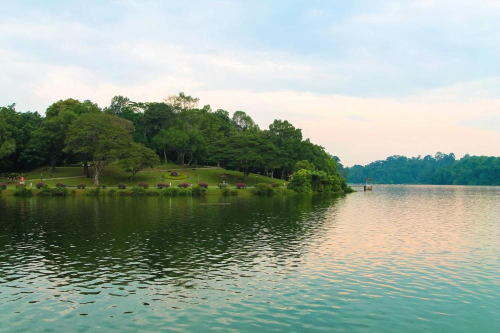 MacRitchie Nature Trail, Singapore Travel (10)