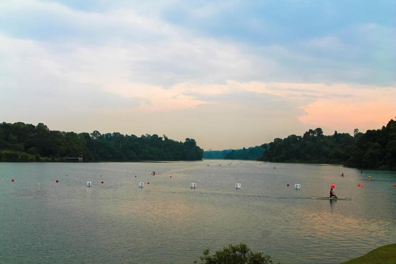 MacRitchie Nature Trail, Singapore Travel (9)