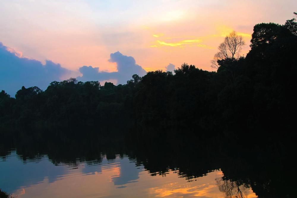 MacRitchie Nature Trail, Singapore Travel (3)