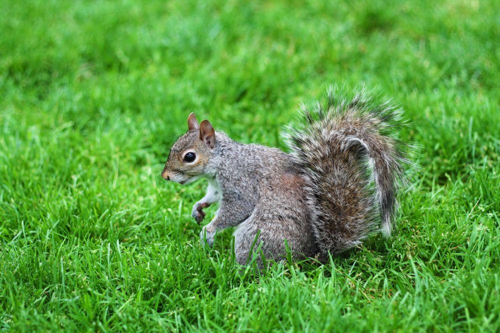 Squirrels, Strawberries And Frozen Yoghurts in Harvard (3)