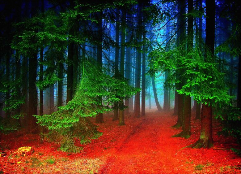 7 Magical Photos That Will Make You Want To Visit The Black Forest In Germany (2)