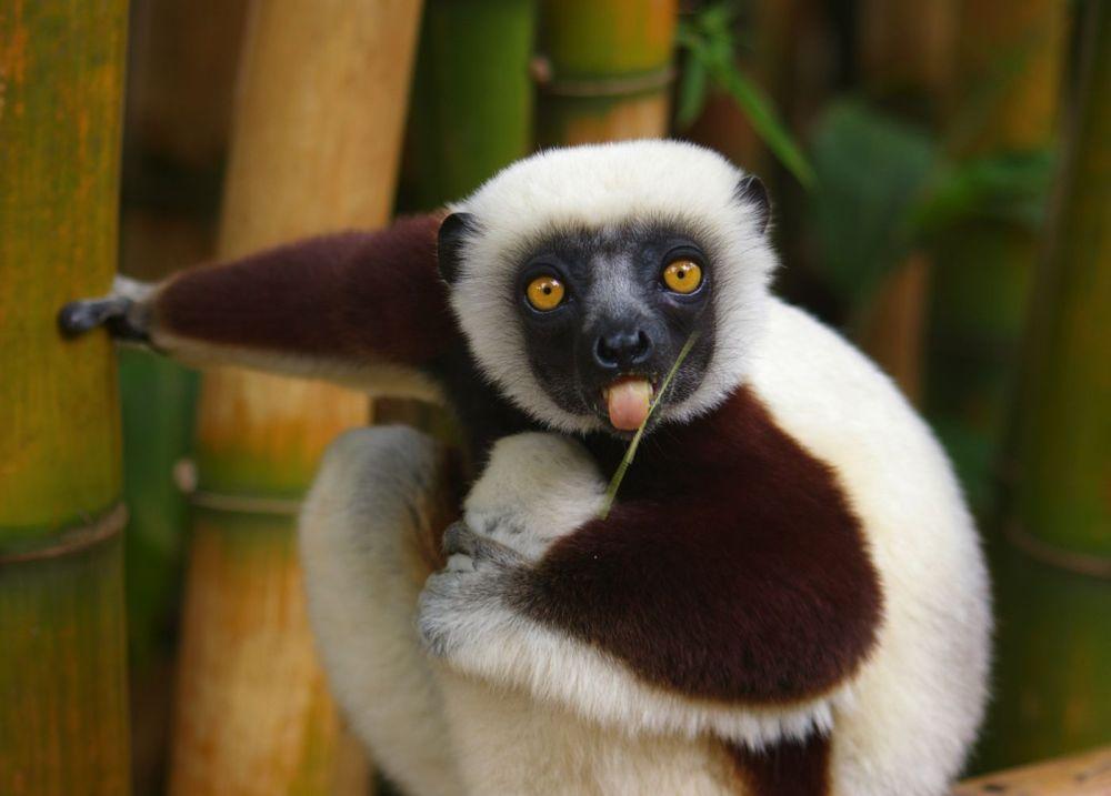 5 Reasons To Visit Madagascar! (3)