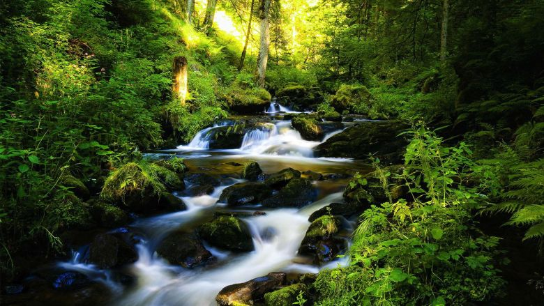 7 Magical Photos That Will Make You Want To Visit The Black Forest In Germany (3)