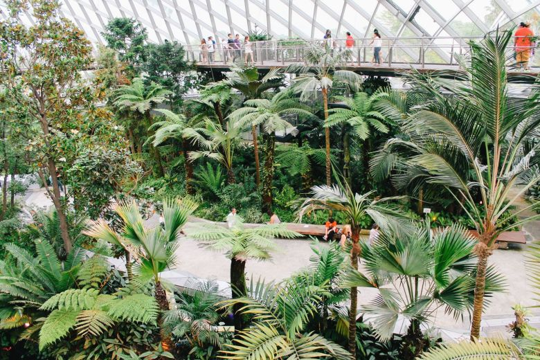 Under The Dome And Into The Forest... In Singapore, Flower Dome and Cloud Forest, Gardens By The Bay (14)