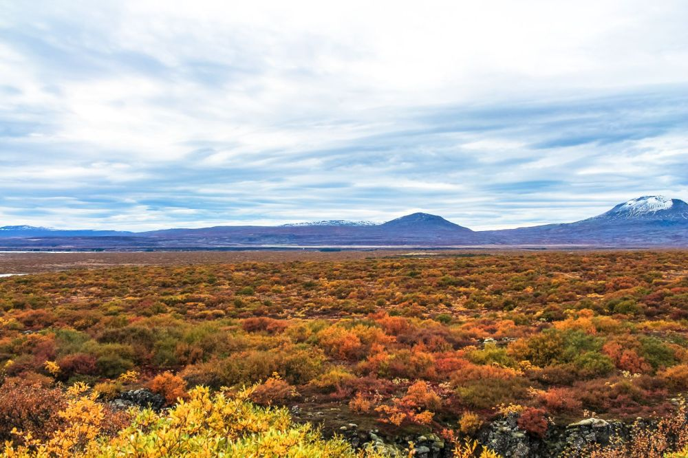 The Northern Lights, Eyjafjallajökull And Þingvellir National Park (11)