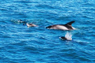 Here Is How To See Whales (And Dolphins) In Iceland! Whale watching in Reykjavik (38) (28)