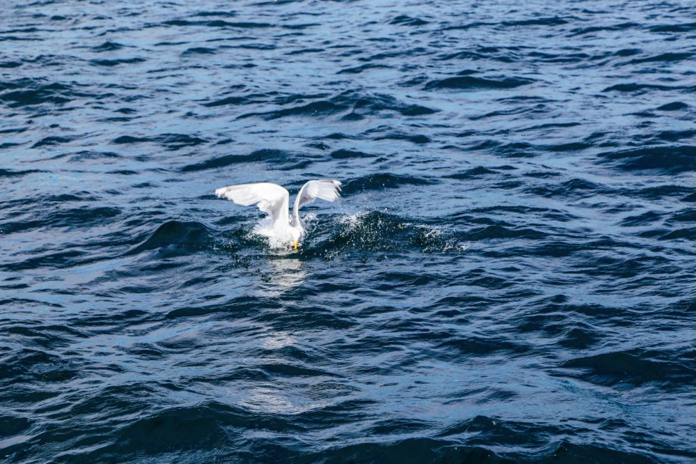 #Nordics48h Challenge - Our First Mission! Stavanger, Cod Fishing, Fishing, Tananger, Norway (42)