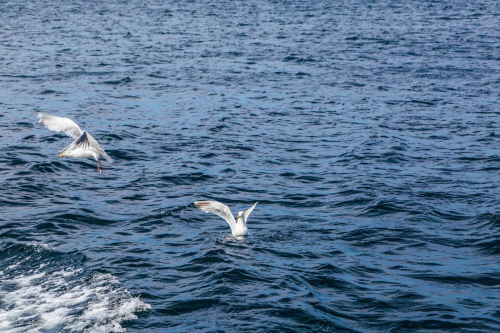 #Nordics48h Challenge - Our First Mission! Stavanger, Cod Fishing, Fishing, Tananger, Norway (45)