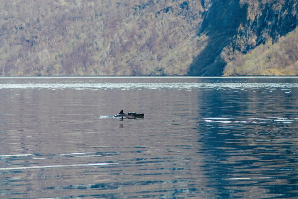 Fjord Safari... in Flam, Norway (38)