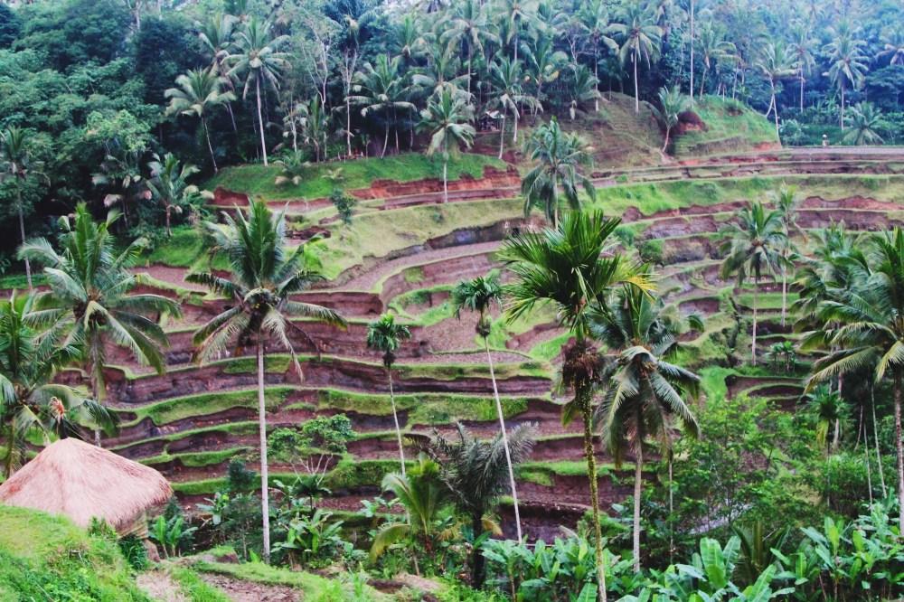 Bali Memories... (9)