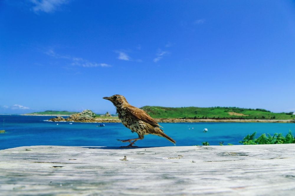 Birds Of A Feather And The Clear Blues Of St Agnes Island, Isles of Scilly (48)