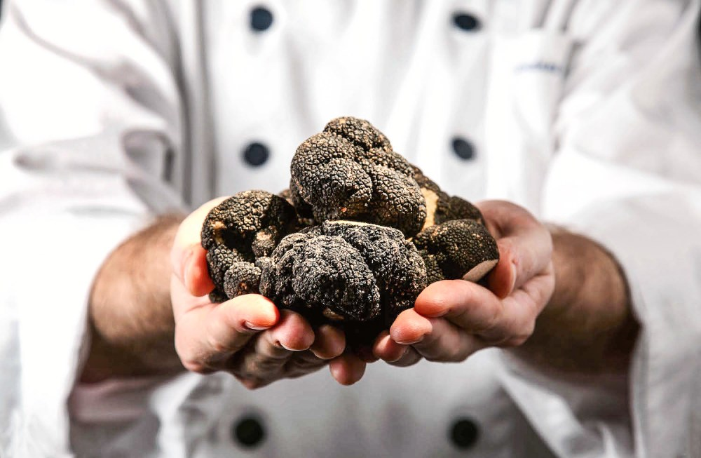 Everyday I'm Truffling: Where To Go Truffle Hunting In Britain (8)