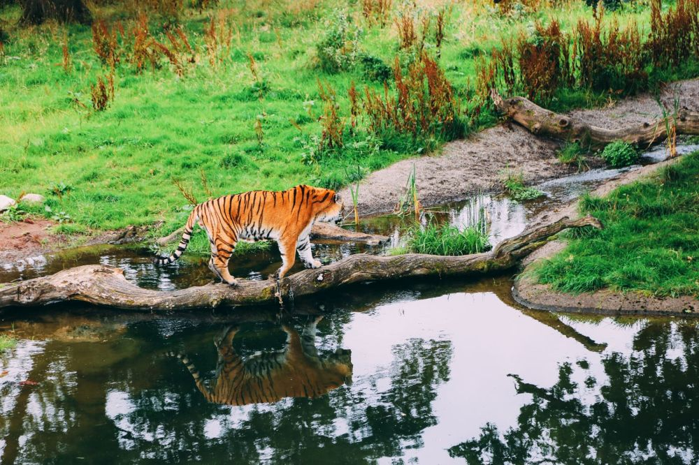 Safari In Scotland - The Photo Diary at Blair Drummond Safari and Adventure Park (25)