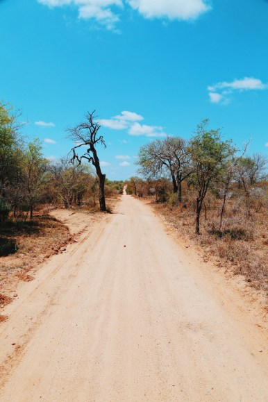Safari In South Africa - A Photo Diary (21)