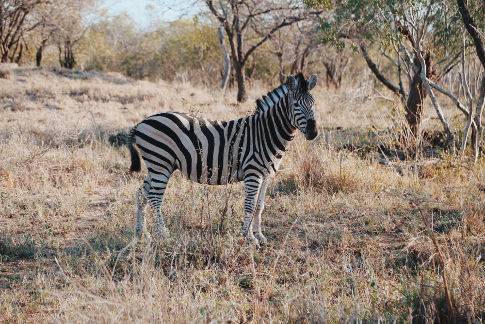 Safari In South Africa - A Photo Diary (20)