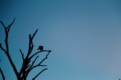 Safari In South Africa - A Photo Diary (14)
