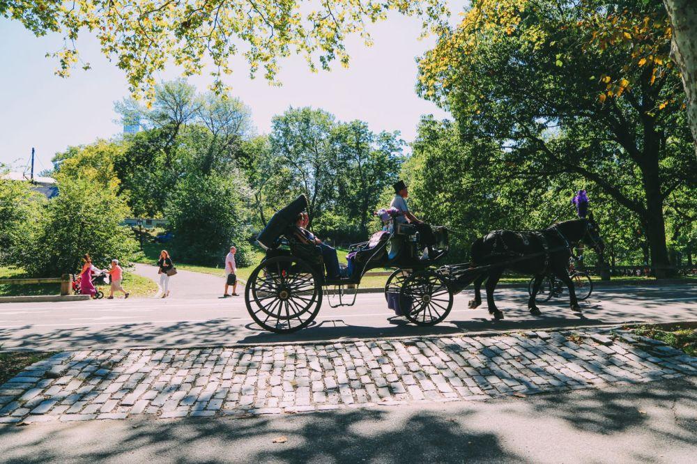 Central Park - A New York Photo Diary (25)