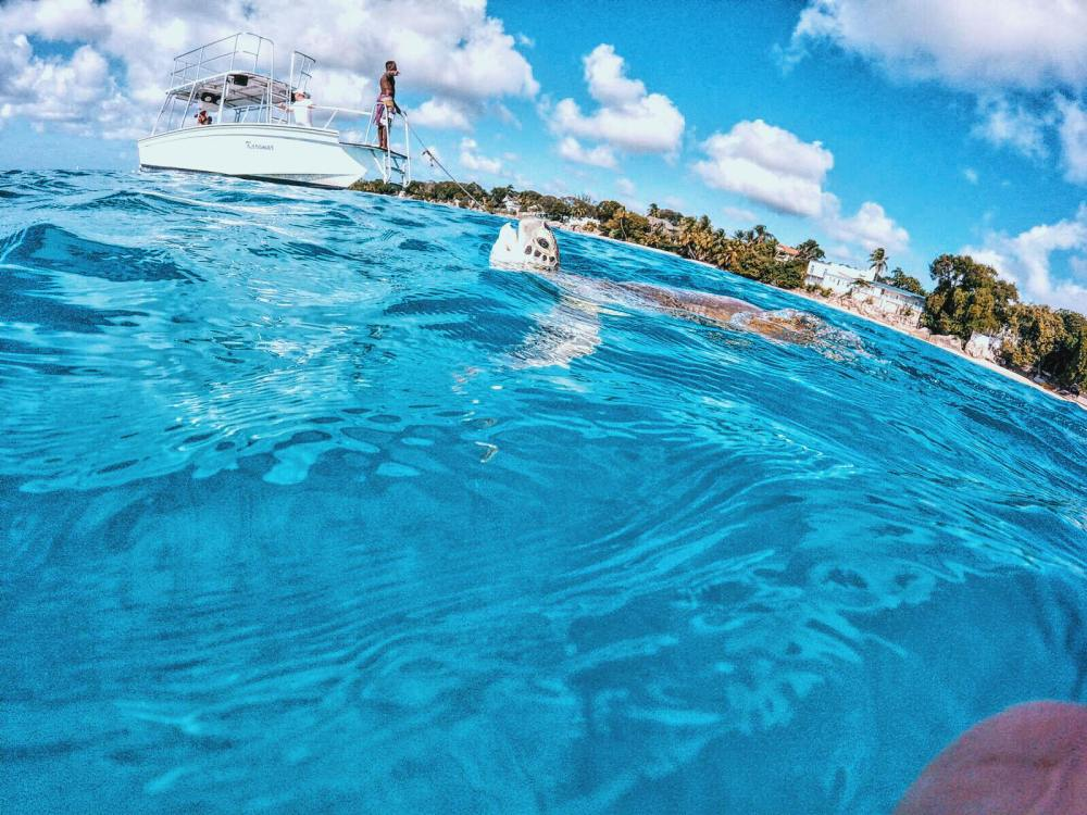 Swimming With Turtles in The Pristine Caribbean Sea - Hello From Barbados! (5)