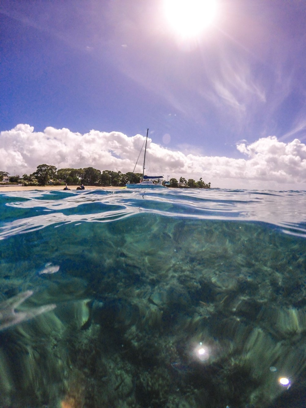 Sailing In Barbados - Swimming With Turtles and Puffer Fish (22)