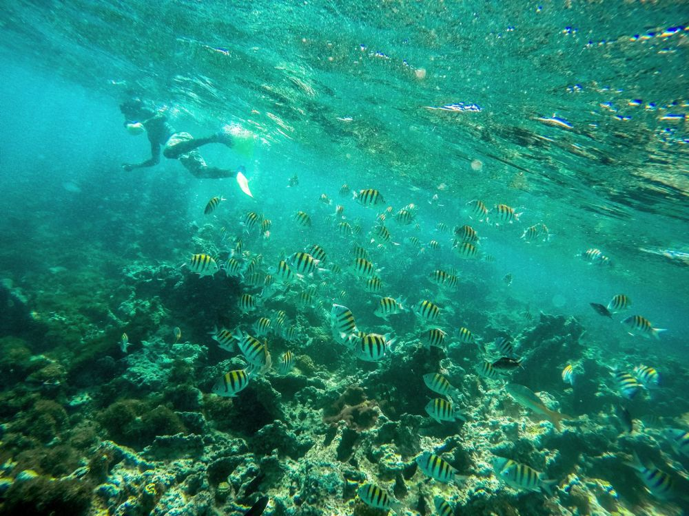 Snorkelling In Antigua - The Photo Diary (6)