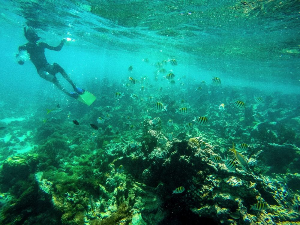 Snorkelling In Antigua - The Photo Diary (18)