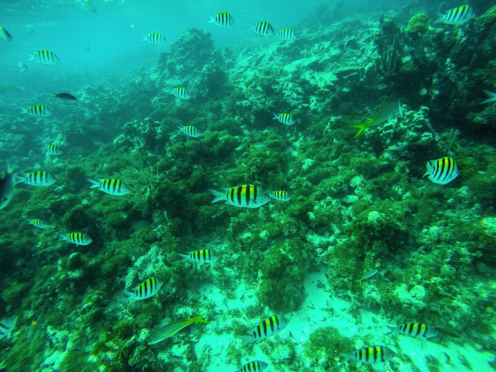 Snorkelling In Antigua - The Photo Diary (11)