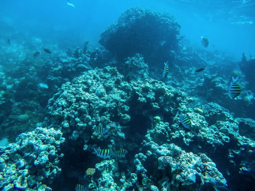 Snorkelling In Antigua - The Photo Diary (7)
