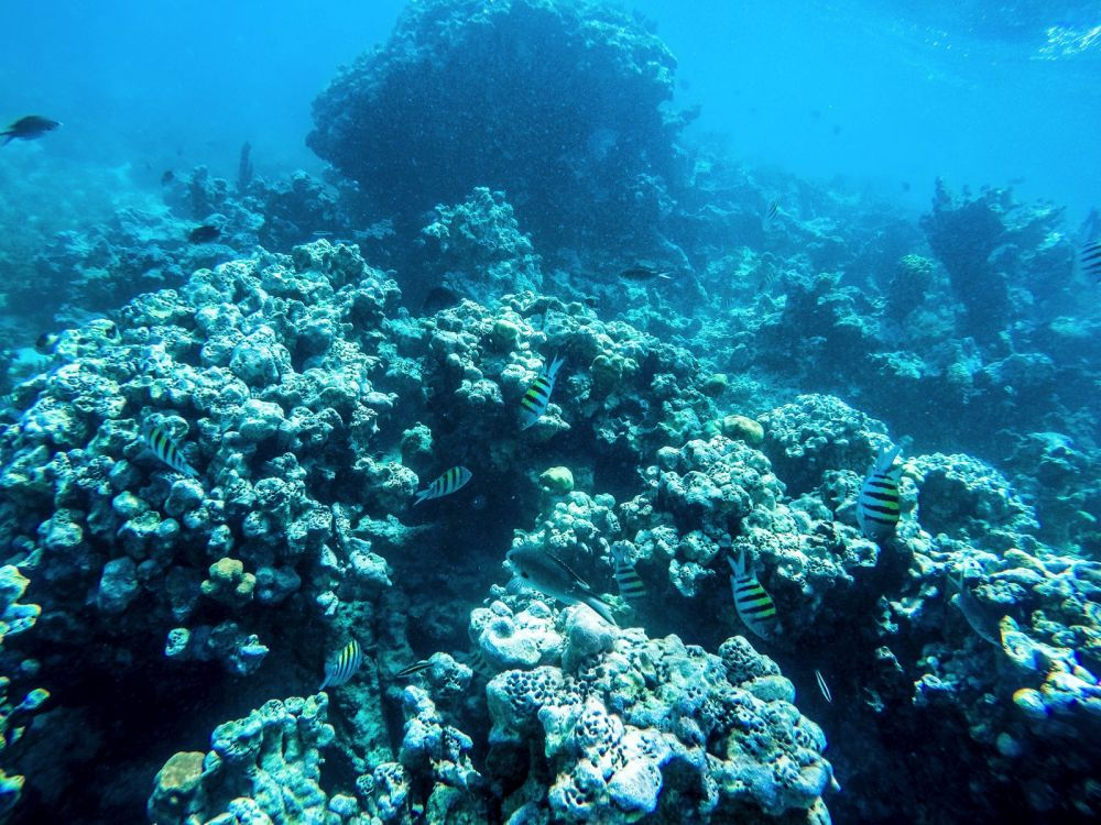 Snorkelling In Antigua - The Photo Diary (16)