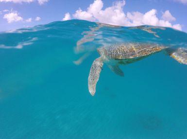 11 Reasons Why You Should Visit Barbados This Year (18)