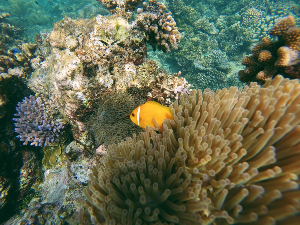 First Impressions Of The Maldives (4)