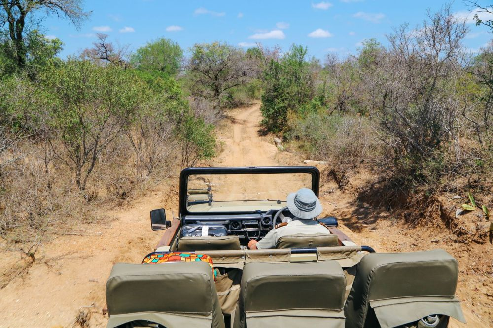 Arriving On Safari In South Africa... (Definitely Not Your Average Airport Transfer!) (5)