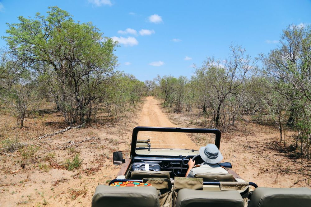 Arriving On Safari In South Africa... (Definitely Not Your Average Airport Transfer!) (9)